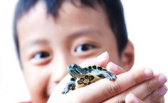 Why You Should Think Twice Before Buying a Pet Turtle