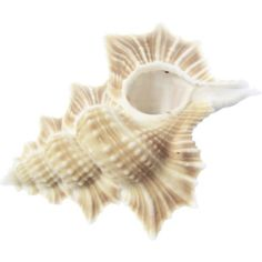 seashells graphics - Google Search