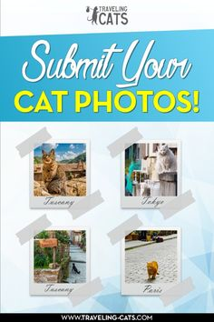 Do you love to photograph cats? Submit them to Traveling Cats to be featured on the website http://www.traveling-cats.com/p/submit-cat-photo.html (cat photography, cats, photograph cats, cat pictures, cat photos)