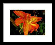 nature, orange, lily, flowers, digital art, photo manipulation, michiale schneider photography, interior decor, framed prints