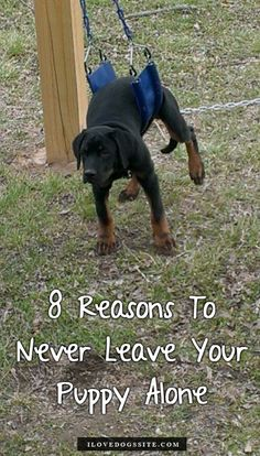 LOL, these 8 pics are hilarious! http://theilovedogssite.com/8-reasons-to-never-leave-your-puppy-unattended/