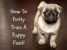 How to Potty Train a Puppy Fast!
