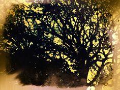 Tree life.. My photo ...