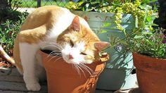Kot w ogrodzie to podstawa!