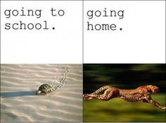 going to school .vs. going home