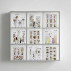 Steffen Dam / cabinet of curiosities
