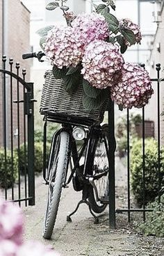 Rose Tinted Paris