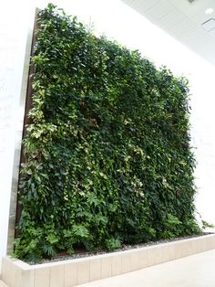 Indoor living wall.  I need to find a 'how to'