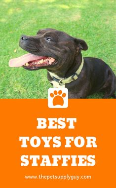 Indestructible Dog Toys for Staffies - The Pet Supply Guy Stimulating Dog Toys, Tough Dog Toys, Every Dog Breed, Dog Gadgets, Interactive Dog Toys, Dog Chew Toys, Old Dogs, Family Dogs, Training Your Dog