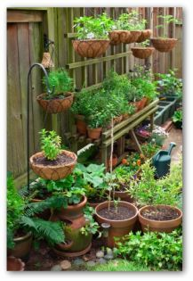 Designing a Container Garden --   The main advantage of designing a container garden is that it doesn't take a lot of space, or a big back yard to grow your own herbs & vegetables