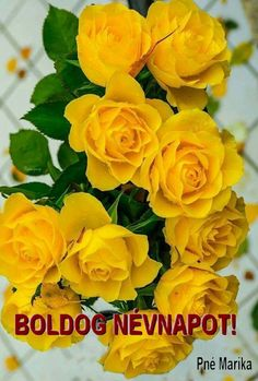 Get yellow flowers and growing information to add cheerful, sunny yellow plants to your landscape. Beautiful Flowers Wallpapers, Beautiful Rose Flowers, Flowers For You, Amazing Flowers, Pretty Flowers, Yellow Flowers Names, Yellow Roses, Pink Roses, Pink Flowers