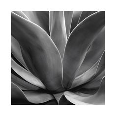 California Succulent Wall Art Prints by LeeAnn Dougherty | Minted