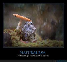 NATURALEZA - Te da todo lo que necesitas cuando lo necesitas