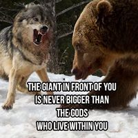 Grizzly and brave Wolf - The wolves were feeding on a deer carcass then the Grizzly arrived and a serious fight broke out but the Grizzly won by a mile. Wisdom Quotes, True Quotes, Great Quotes, Inspirational Quotes, Amazing Quotes, Poem Quotes, Friend Quotes, Motivational, Wolf Spirit