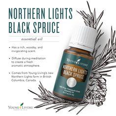 Northern Lights Black Spruce