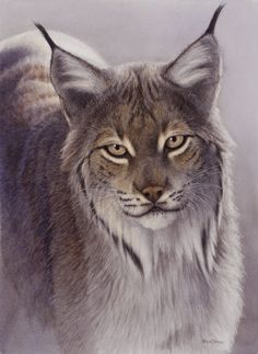Image detail for -Renso Tamse - Wildlife Kunst - 'Lynx' - Wildlife Art, Wildlifeart ...