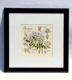 Moja pasja, mój świat: Zielnik - Jasmin - Véronique Enginger - études de botanique