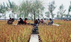 agricultrual classroom