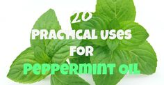 20 Practical Uses for Peppermint Oil