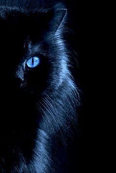 Blu e nero, un abbinamento cool per la moda e il make up dell'inverno 2012/2013. Sarete sensuali come gatte!