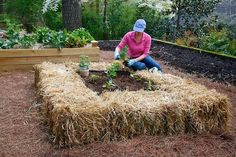 Staw bale garden - we have done this at the nursery, works great, see how you just get to sit down. Fill like shown with good rich soil or potting soil, incorporate good organic fertilizer, water daily for couple weeks before planting. The bale's heat up and hold moisture which the vegetable love. Continue to fertilize through out the season, these are straw bale's