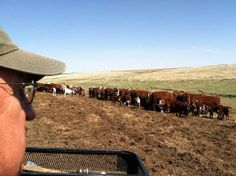 The Herdsman; Norton, KS; Agriculture at Work. LIKE, COMMENT, OR SHARE TO VOTE!