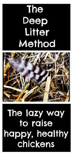 Inside the Chicken Coop: The Deep Litter Method. The lazy way to raise happy, healthy chickens.   Backyard Chicken Project