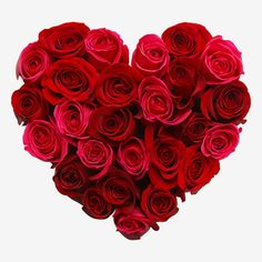 Flowers for Valentines Day on 14 February 2020 – choose from single red rose, dozen red roses, two dozen red roses or 100 roses with our Valentine's Day delivery. Cupid approved Valentines flowers available with FREE delivery.