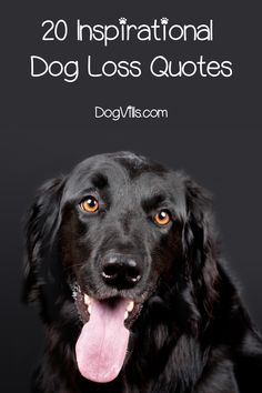 While these 20 inspiration and touching dog loss quotes won't take away your grief they will help you know you're not alone. Dog Loss Quotes, Best Dog Toys, Best Dogs, Miniature Dog Breeds, Outdoor Dog Toys, Dog Breeds Little, Loss Of Dog, Diy Dog Collar