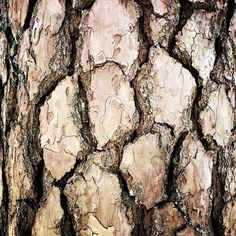Indestructible - the #bark of a #tree tells more than one story .   Visit me on Youtube. Link in Bio! #buschpirat #treebark #simplicity #patternofnature #pattern #nature #natures #naturephotography #naturelovers #natureart #naturelove #naturephoto #naturebeauty #natureisbeautiful #naturephotos #outdoorphotography