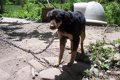 Category: Dog Barking : Dog Obedience Training Blog