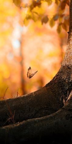 Butterfly landing on a tree