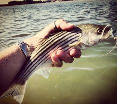 I heart #smallfish. #schoolies #thumbring