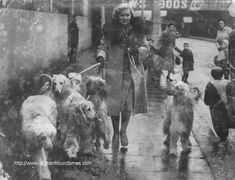 Elleen Snelling and pack of hounds Crufts 1950's