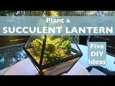 Plant a Succulent Lantern, Five DIY Ideas