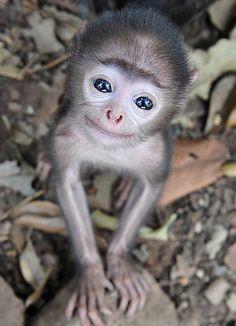 Look at those eyes!  #animals #wildlife #travel