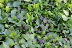 Microgreens are one of the easiest plants to grow and mini sprouts go from seed to salad bowl in less than 14 days. Here are 9 tips from an expert.