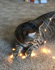 My glow boi . . . . . #cats #cat #kittens #kitten #kitty #instacat #instakitten #catsofinsta #caturday #catlover #catmemes #mew #meow #lovecats #catlovers #kittycat #meow #fostercat #fosterkitties #petsofig #petstagram #petsofinstagram #felinegood #catlife #memes #textpost #tumblr #tumblrpost #kittenlady