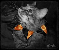 NessaRose . . . all dressed up for Halloween!