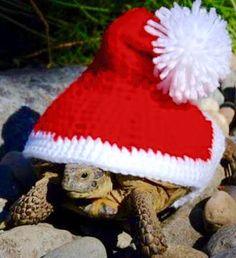 Merry Christmas Christmas Animals, Merry Christmas, Winter Hats, Merry Little Christmas, Wish You Merry Christmas