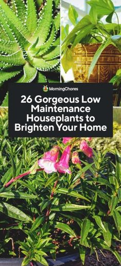 26 Gorgeous Low Maintenance Houseplants to Brighten Your Home