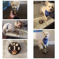 Ted is loving his @faerytailsuk dog birthday cake!