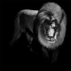 Animals Selfies In Black & White | Funofart