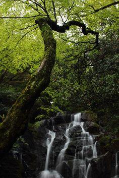 .Japanese Waterfall