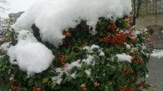 sotto la neve http://plorit.wordpress.com/2013/11/27/bialy-raport-il-rapporto-bianco/