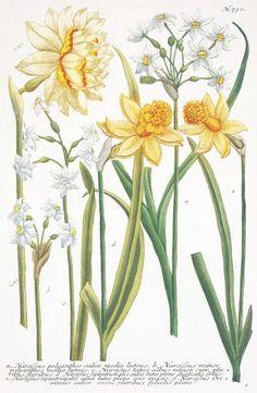 Framed Art Prints, Fine Art Prints, Poster Prints, Canvas Prints, Posters, Rosary Pea, Carillons Diy, Canvas 5, White Plants