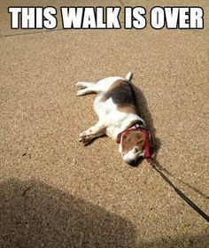 Sometimes I feel like doing that on my walks. Just want to lay down on the sidewalk and take a nap! Or the street. Wherever I happen to land.