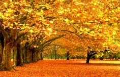 Fall Scenery Photo Download Free.