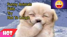 Funny Animals Fails 13   Try Not To Laugh Challenge   Compilation Vines