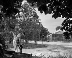 #filmphotography #blackandwhite #photography #analogphotography #filmisnotdead #largeformat #architecure #zoo